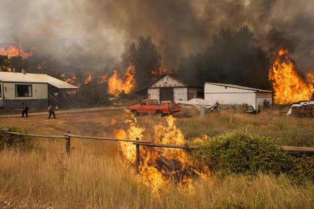 Firefighters attempt to protect a home and outbuildings from the Twisp River fire near Twisp, Washington August 20, 2015. (Photo by David Ryder/Reuters)