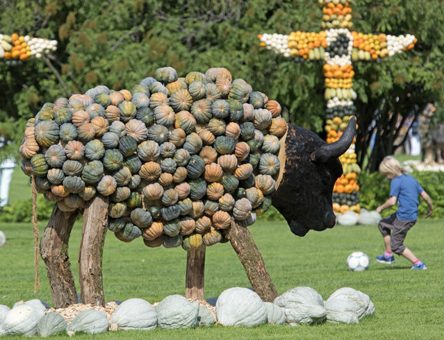 """A child plays with a ball besides a buffalo sculpture decorated with pumpkins during the autumn exhibition """"Wild West"""" at the horticultural exhibition """"ega"""" (Erfurt Garden Construction Exhibition) in Erfurt, central Germany, Tuesday, September 9, 2014. Gardeners created different fairy tales with more than 20.000 pumpkins. The exhibition started on Sept. 7, 2014 and last until Oct. 31, 2014. (Photo by Jens Meyer/AP Photo)"""