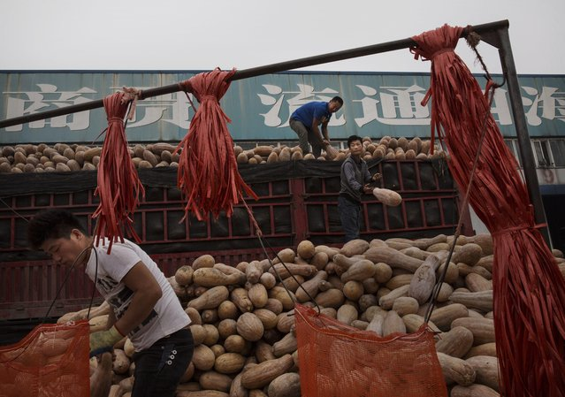 Chinese laborers unload squash from a truck to sell at a local market on September 26, 2014 in Beijing, China. (Photo by Kevin Frayer/Getty Images)