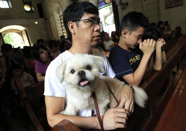 """A man with his pet dog attends a mass before the celebration of the feast day of the Patron Saint of Animals, Saint Francis of Assisi, at a Catholic church in Manila October 5, 2014. More than a dozen pet owners brought their pets to a church to be blessed as part of a tradition in remembrance of St. Francis of Assisi called the """"Blessing of the Animals"""". (Photo by Romeo Ranoco/Reuters)"""