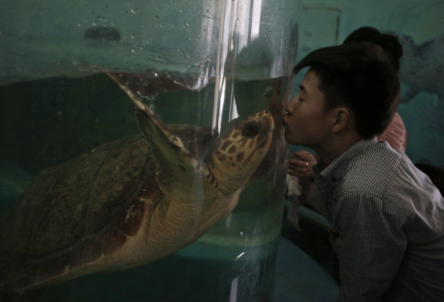 A North Korean man kisses a turtle through the glass of its tank at the newly opened Pyongyang Central Zoo in Pyongyang, North Korea, Tuesday, August 23, 2016. (Photo by Dita Alangkara/AP Photo)