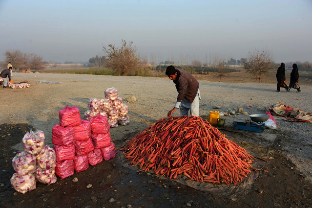 An Afghan vendor arranges a mound of harvested carrots soon after pouring water to keep them fresh in Jalalabad on December 19, 2014. Poverty and an ongoing insurgency by the ousted Taliban still pose a threat to the stability of the country. (Photo by Noorullah Shirzada/AFP Photo)