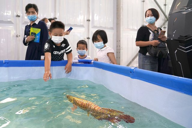 A bionic fish on display during the 2020 China International Fair for Trade in Services (CIFTIS) at Beijing Olympic Park on September 6, 2020 in Beijing, China. As China recovers from the COVID-19 epidemic, about 2,000 Chinese and foreign enterprises will participate and showcase their newest technology in public health and digital technology in the China International Fair for Trade in Services. (Photo by Lintao Zhang/Getty Images)
