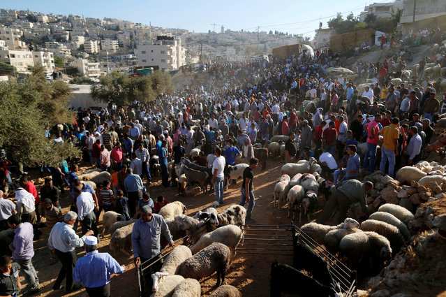 Palestinians gather at a livestock market, ahead of the Eid al-Adha festival, in the West Bank town of Bethlehem September 10, 2016. (Photo by Ammar Awad/Reuters)