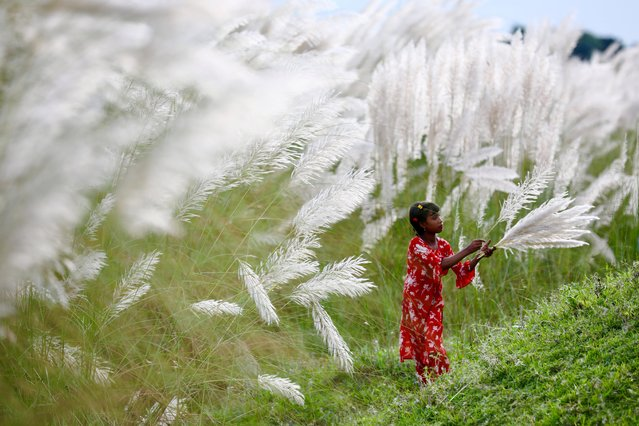 A girl picks catkins at a field amid the COVID-19 pandemic in Sarighat, on the outskirts of Dhaka, Bangladesh, October 2, 2020. (Photo by Mohammad Ponir Hossain/Reuters)
