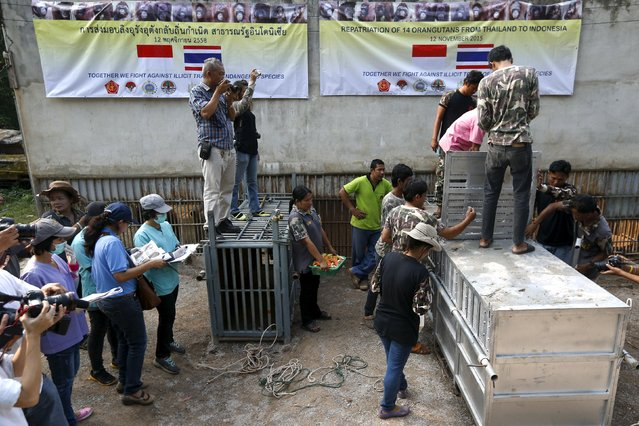Thailand wildlife officers and media stand next to a cage holding orangutans as preparations for the animals' repatriation to Indonesia at Kao Pratubchang Conservation Centre in Ratchaburi, Thailand, November 11, 2015. (Photo by Athit Perawongmetha/Reuters)