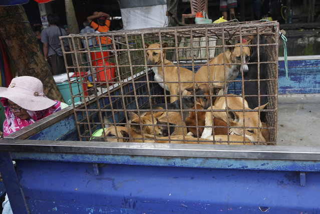 In this undated photo released by Dog Meat Free Indonesia, dogs for sale are seen in a cage on the back of a truck at a market in Air Madidi, North Sulawesi, Indonesia. International stars of acting, music and sports have urged Indonesia's president to ban what they say is a brutal trade in dog and cat meat for human consumption. (Photo by Dog Meat Free Indonesia via AP Photo)