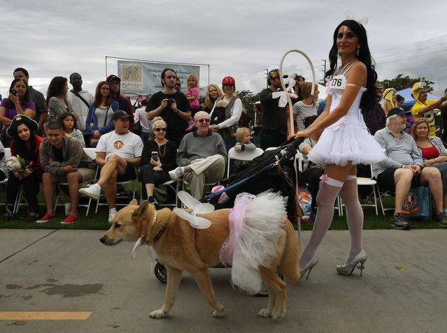 Dogs and their owners dressed in Halloween costumes parade during the annual Haute Dog Howl'oween event in Long Beach, California on October 30, 2016. (Photo by Mark Ralston/AFP Photo)