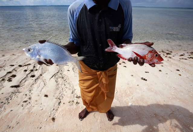 Kaibakia Pinata holds the fish he caught in his nets off Bikeman islet, located off South Tarawa in the central Pacific island nation of Kiribati May 25, 2013. (Photo by David Gray/Reuters)