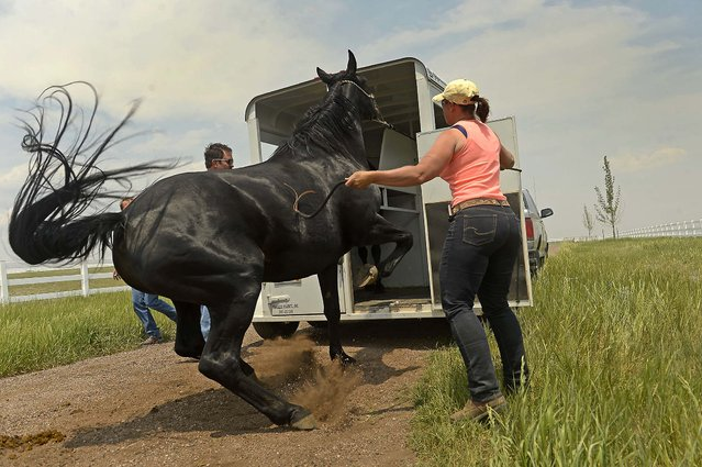 Volunteer horse trainer Kyle Kimball helps guide a  horse into a trailer while rancher Alan Erickson evacuates five of his horses from his property along Shiloh Ranch Drive to protect them from the approaching Black Forest Fire in Colorado Springs, on June 13, 2013. (Photo by Helen H. Richardson/The Denver Post)