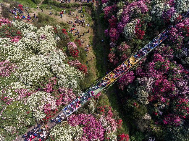 Aerial photos show tourists walking among azaleas in bloom in Bijie, Guizhou province, China, March 28, 2021. (Photo credit should read Costfoto/Barcroft Media via Getty Images)