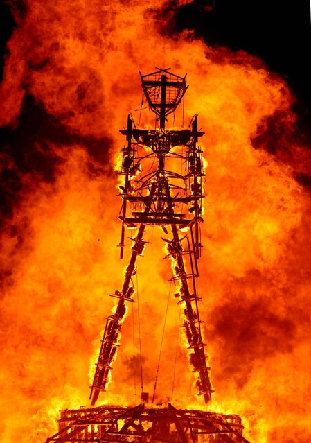 """The """"Man"""" burns on the Black Rock Desert at Burning Man near Gerlach, Nev. on August 31, 2013.U.S. Bureau of Land Management spokesman Mark Turney said Saturday more than 61,000 people have turned out so far for the weekend Burning Man outdoor art and music festival in the Black Rock Desert of northern Nevada. (Photo by Andy Barron/AP Photo/Reno Gazette-Journal)"""