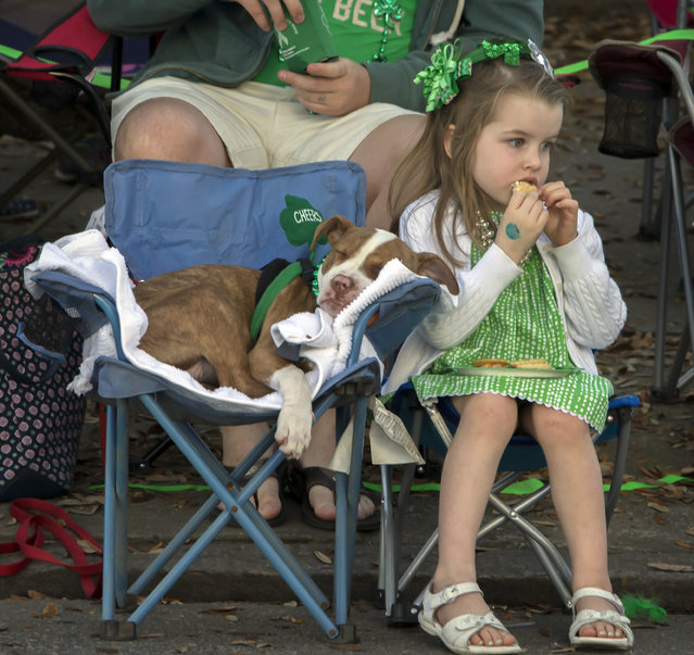 Mary Kate Ninness, 4, of Marietta, Ga. eats a cookie next to her 4-month-old puppy Athena during the 191st St. Patrick's Day parade, Tuesday, March 17, 2015, in Savannah, Ga. Organizers have long billed the Savannah St. Patrick's Day parade as the nation's second largest based on the size of the procession, rather than the number of people watching. (Photo by Stephen B. Morton/AP Photo)