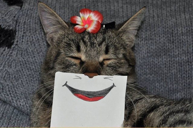 Funny Hand-Drawn Cat Facial Expressions