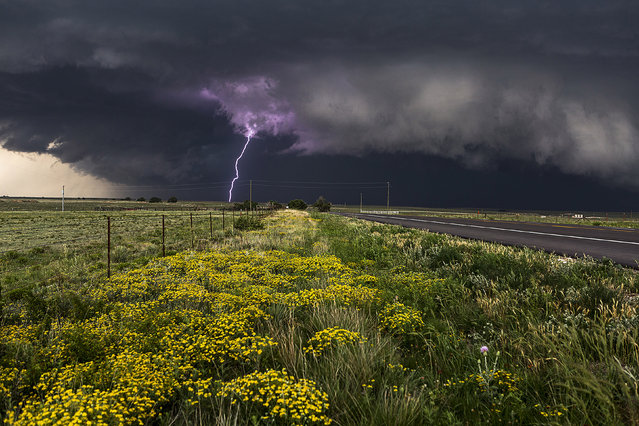 Purple Lightning, Canadian Texas, 2014. These stunning images show the phwoar-some power of some of Americas most extreme weather. Camille Seamans wondrous work features huge supercells, crashing lighting and gale-force winds. (Photo by Caters News Agency)