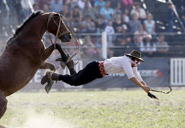 A gaucho is unseated by a wild horse during the annual celebration of Criolla Week in Montevideo, March 31, 2015. (Photo by Andres Stapff/Reuters)