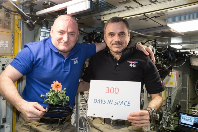 One-year mission crew members Scott Kelly of NASA (left) and Mikhail Kornienko of Roscosmos (right) celebrated their 300th consecutive day in space on January 21, 2016. The pair will spend a total of 340 days aboard the International Space Station as scientists seek to understand what happens to the human body while in microgravity for extreme lengths of time. (Photo by NASA)