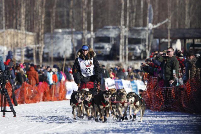 Anna Berington's team leaves the start chute at the restart of the Iditarod Trail Sled Dog Race in Willow, Alaska March 6, 2016. (Photo by Nathaniel Wilder/Reuters)