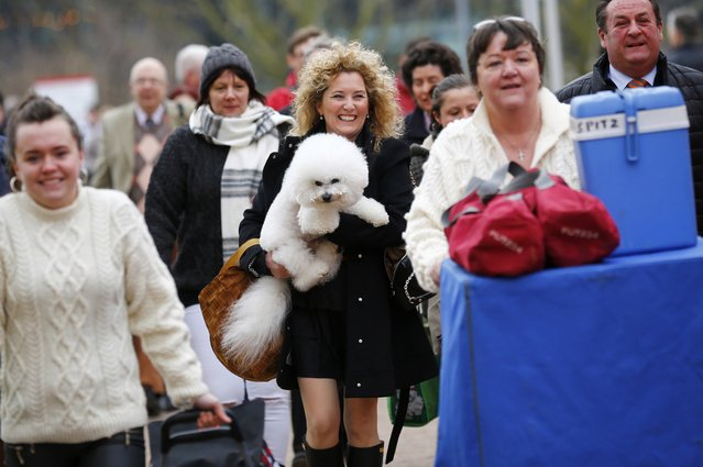 A woman arrives with a Bichon Frise for the first day of the Crufts Dog Show in Birmingham, Britain March 10, 2016. (Photo by Darren Staples/Reuters)