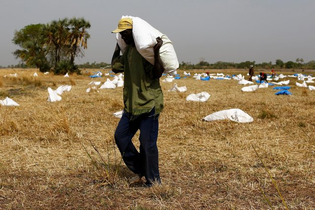 A man collects sacks of food from a dry river bed after a United Nations World Food Programme (WFP) airdrop close to Rubkuai village in Unity State, northern South Sudan, February 18, 2017. (Photo by Siegfried Modola/Reuters)