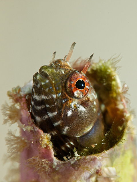 2014 Underwater Photography Photo Contest winners, Macro Not Swimming category, 2nd place. (Photo by Ellen Cuylaerts/UnderwaterPhotography.com)