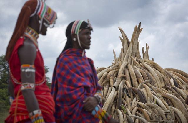 Maasai in ceremonial dress stand around after having their photograph taken with visitors, next to one of around a dozen pyres of ivory, in Nairobi National Park, Kenya Thursday, April 28, 2016. (Photo by Ben Curtis/AP Photo)