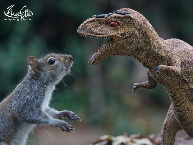 """Mammals Vs Dinosaurs"". (Photo by Max Ellis)"
