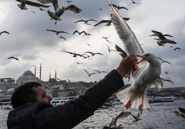 A man feeds seagulls with fish under the Galata Bridge in Istanbul, Turkey, 22 November 2019. (Photo by Sedat Suna/EPA/EFE)