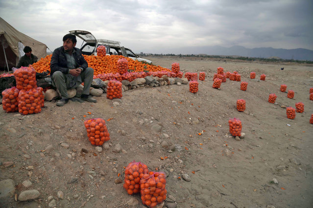 Afghan men sell oranges on the outskirts of Jalalabad, Afghanistan, 02 January 2020. (Photo by Ghulamullah Habibi/EPA/EFE)