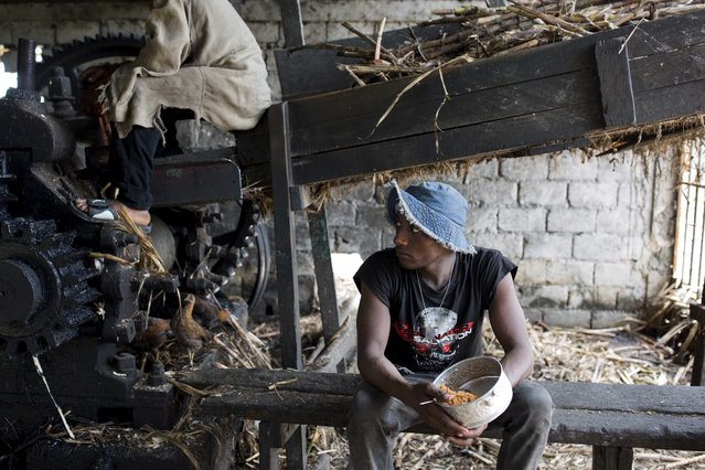 In this June 16, 2017 photo, Ronalson Chery, 26, eats rice and beans he brought from home as he takes a lunch break from moving sugar cane to the machine that extracts the juice at the Ti Jean distillery, which produces clairin, a sugar-based alcoholic drink, in Leogane, Haiti. Haiti's most famous export is Barbancourt, a delicately flavored, carefully aged rum that's considered among the best in the world. Then there's its rustic cousin clairin, a drink that's much cheaper and relatively rare outside this struggling Caribbean country. Clairin, or kleren as it's known in Haitian Creole, is less refined than rum and typically not aged, though some artisanal varieties are subjected to an aging process to give them a more mellow and distinctive flavor. It's produced at hundreds of small distilleries scattered across Haiti. At one of them, Ti Jean, in the coastal town of Leogane west of the capital, men with their heads covered to ward off the tropical sun use machetes to cut down the towering sugar cane stalks that surround the distillery. They feed the cane into a grinder to produce the juice that is the raw material of both clairin and the type of rum associated with the French Caribbean. Most rum produced elsewhere is made from molasses. The juice that flows out the other side is a murky caramel color, though the finished product will be as clear as vodka. The clairin is fermented and filtered and then shipped in plastic jugs for sale in market stalls and by street merchants. Individual retailers add flavors with herbs or fruit. (Photo by Dieu Nalio Chery/AP Photo)