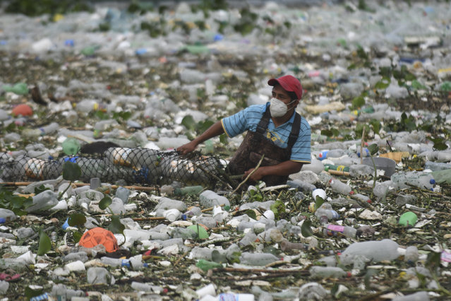 A worker of the Lake Amatitlan Authority (AMSA) collects garbage washed away by rains and held by a floating barrier installed in one of the tributaries of the Lake in Amatitlan, 30 kms south of Guatemala City, on May 29, 2020, amid the Covid-19 coronavirus pandemic. (Photo by Johan Ordonez/AFP Photo)