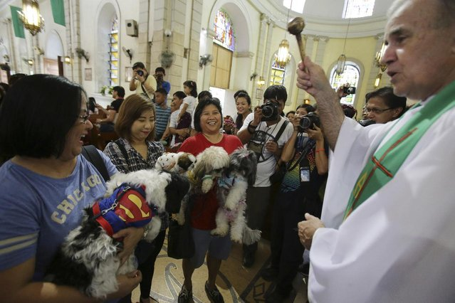 A Catholic priest sprinkles holy water on pet dogs during an animal blessing rites at the Malate church in Manila, Philippines on Sunday, October 5, 2014. (Photo by Aaron Favila/AP Photo)