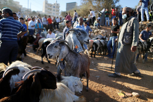 Palestinians gather as goats are on display at a livestock market, ahead of the Eid al-Adha festival, in the West Bank town of Bethlehem September 10, 2016. (Photo by Ammar Awad/Reuters)