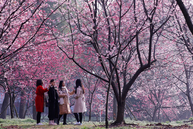 Visitors are seen under blooming cherry blossoms at the East Lake Cherry Blossom Park in Wuhan, Hubei province, China March 9, 2018. (Photo by Reuters/China Stringer Network)
