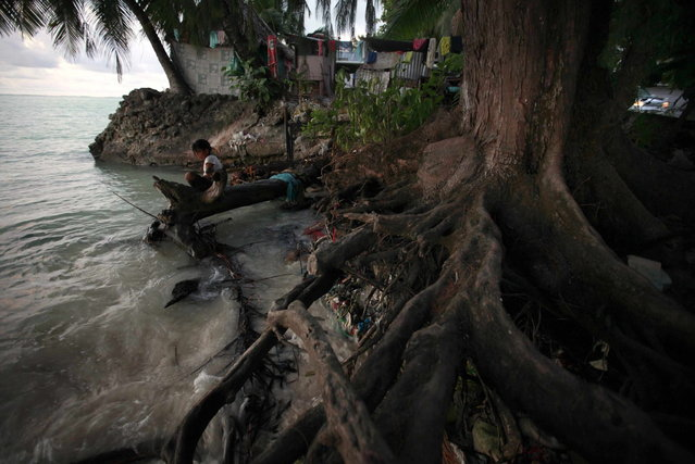 A girl sits on a log next to the roots of a tree, which have been exposed as a result of high-tides, near the village of Teaoraereke on South Tarawa in the central Pacific island nation of Kiribati May 25, 2013. (Photo by David Gray/Reuters)