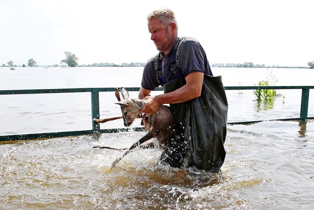 Fisherman Gernot Quaschny rescues a deer from the floods near Schoenhausen, Germany, on June 12, 2013. A broken dike at the River Elbe caused several villages in the area to be flooded. (Photo by Christian Charisius/Dpa)