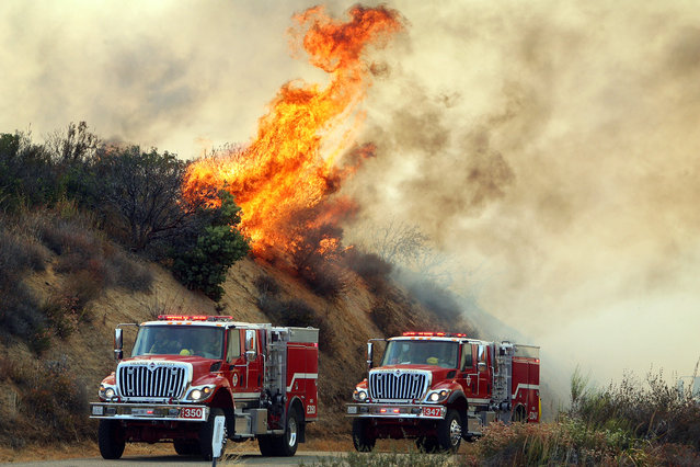 Flames from the Falls Fire burn on a hillside along South Main Divide Road in the Cleveland National Forest as firefighters drive through the area on Monday, August 5, 2013. (Photo by Kurt Miller/AP Photo/The Press-Enterprise)