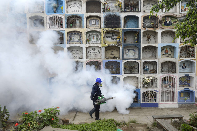 A specialist fumigates the Nueva Esperanza graveyard in the outskirts of Lima on January 15, 2016. Health officials fumigated the largest cementery in Peru and second largest in the world to prevent Chikunguya and Zika virus, which affect several South American countries. (Photo by Ernesto Benavides/AFP Photo)