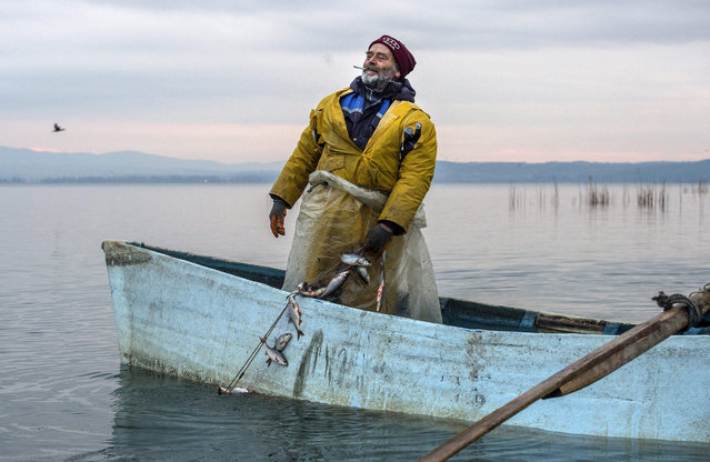 A fisherman pulls a fishing net from the Dojran lake, in Djordan, the former Yugoslav Republic of Macedonia, 04 January 2017. Dojran lake provides 90 percent of the fish that Macedonian orthodox believers eat during the Christmas fasting, especially on Christmas eve. 15 years ago the Dojran lake was on the verge of ecological disaster because it was running out of water and the flora and fauna in it was dying out, but a canal providing new streams of water was made and brought the lake back to life. The lake although small by surface, it is the main source of sweet water fish for Macedonia. (Photo by Georgi Licovski/EPA)