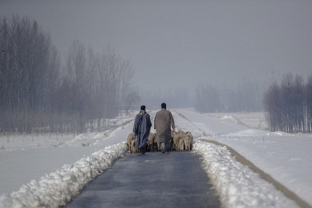 Kashmiri shepherds walk with their heard of sheep on a snow covered road near Hussainpora 55 kilometers (34 miles) south of Srinagar, Indian controlled Kashmir, Monday, January 16, 2017. (Photo by Dar Yasin/AP Photo)