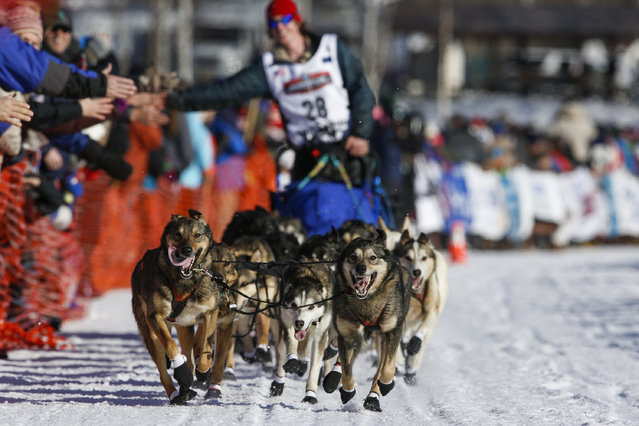 Travis Beals' team leaves the start chute at the restart of the Iditarod Trail Sled Dog Race in Willow, Alaska March 6, 2016. (Photo by Nathaniel Wilder/Reuters)