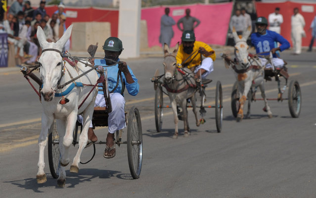 Pakistani donkey carters participate in a race during Sindh festival in Karachi on February 4, 2014. The race was held as part of the Sindh cultural festival organized by the Sindh provincial government. (Photo by Rizwan Tabassum/AFP Photo)