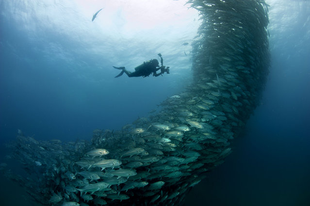 The swirling fish swim past diver David Castro with his camera