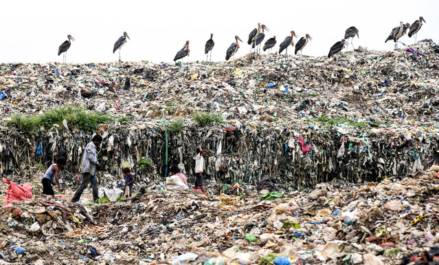 """Indian rag pickers look for recyclable materials as greater adjutant storks stand on the top of one of the largest disposal sites in northeast India at the Boragaon area of Guwahati on June 4, 2019, ahead of the """"World Environment Day"""". The World Environment Day, annually marked on June 5, is a way to encourage awareness and action to protect the environment. (Photo by Biju Boro/AFP Photo)"""