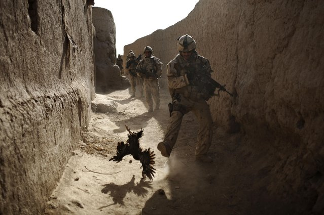 In this Saturday, September 11, 2010 file photo, a Canadian soldier with the 1st RCR Battle Group, The Royal Canadian Regiment, chases a chicken seconds before he and his unit were attacked by grenades shot over the wall during a patrol in Salavat, southwest of Kandahar, Afghanistan. (Photo by Anja Niedringhaus/AP Photo)