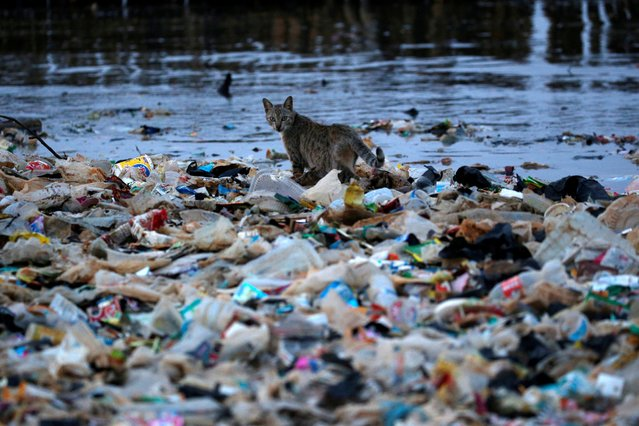 A cat is seen among rubbish at a shoreline in Jakarta, Indonesia, June 21, 2019. (Photo by Willy Kurniawan/Reuters)