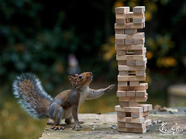 """Squirrel Jenga"". (Photo by Max Ellis)"