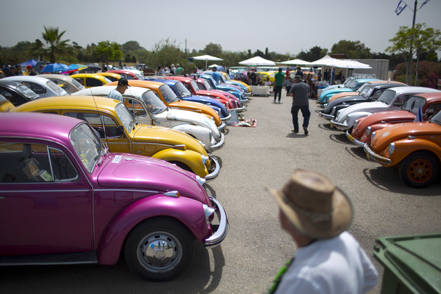 """Volkswagen Beetles displayed during the annual gathering of the """"Beetle club"""" in Yakum, central Israel, Friday, April 21, 2017. The Israeli Beetle club was founded in 2001 and there are 500 members, they meet every Friday across the country in small groups but once a year they all gather and launch new renovated cars. (Photo by Oded Balilty/AP Photo)"""