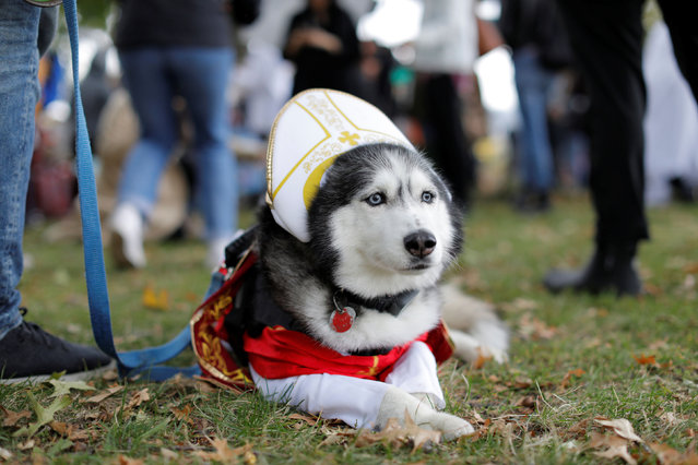Keiko the Husky is dressed as The Pope at the Tompkins Square Halloween Dog Parade in Manhattan, New York City, U.S., October 20, 2019. (Photo by Andrew Kelly/Reuters)