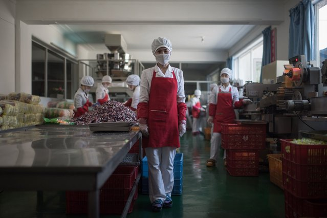 In a photo taken on April 11, 2017 Hong Kum-Ju (27) poses for a portrait at the food factory where she works, in the eastern port city of Wonsan. (Photo by Ed Jones/AFP Photo)